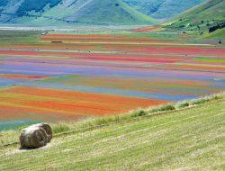 Умбрия — небольшой регион в центральной Италии, настоящее сердце страны. Это единственный регион в полуостровной её части, не имеющий выхода к морю.  Именно здесь расположен небольшой городок Кастеллуччо ди Норча, где находятся знаменитая цветущая «Великая равнина».