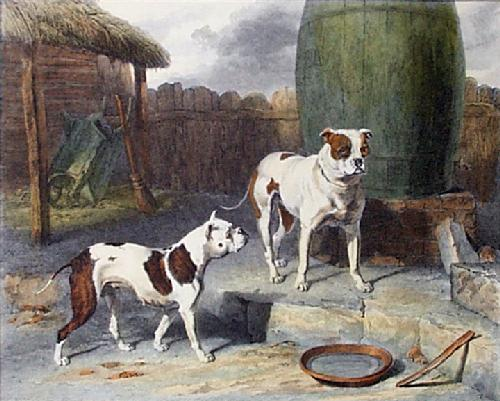 extinct-breed-dogs-00