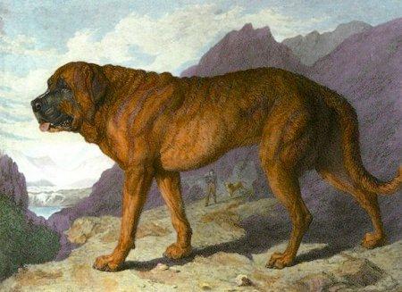 extinct-breed-dogs-07