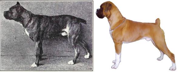 select-dog-3