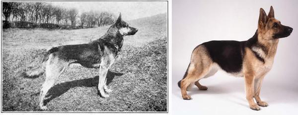 select-dog-5