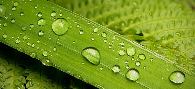 растения обладают чувствами, приблизительно эквивалентными нашему слуху