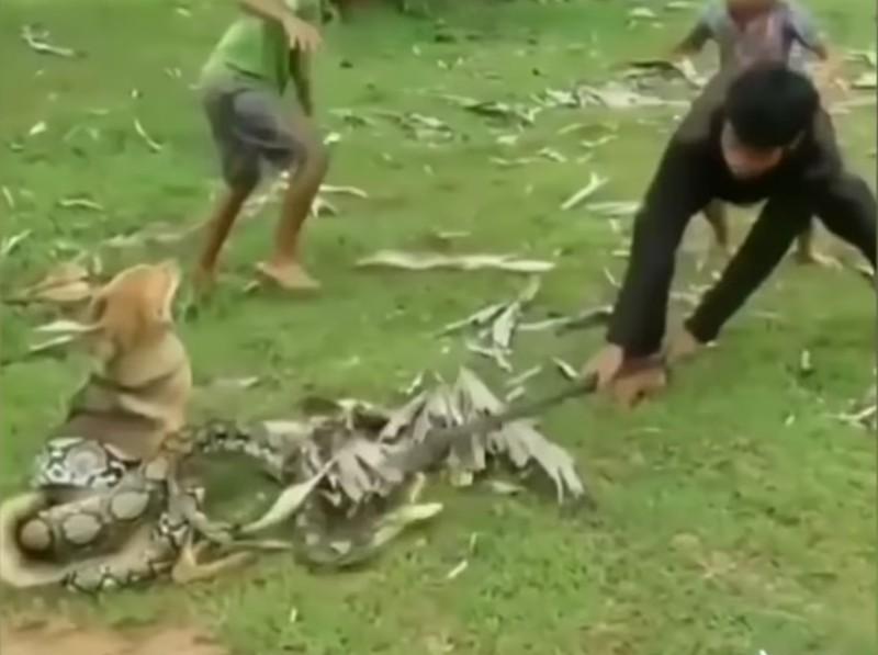Подростки спасли пса от змеи