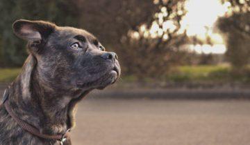 Японские ученые представили систему навигации для собак